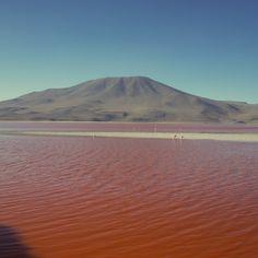 Laguna Colorada - Tour Salar de Uyuni - Bolívia Mochilão pela América do Sul