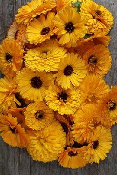 Herb Garden, Home And Garden, Korn, Life Is Good, Herbalism, Diy And Crafts, Spices, Pumpkin, Herbs