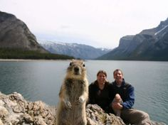 EN IMAGES 22 photobombs d'animaux