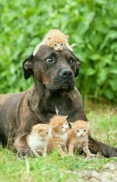 13 Confused Dog Photos And Memes That Will Leave You Laughing and cute cats and dogs Cute Funny Animals, Cute Baby Animals, Animals And Pets, Cute Cats, Funny Birds, Nature Animals, Funny Cats, Beautiful Cats, Animals Beautiful