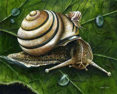 Art Van, Nature Journal, Olsen, Botanical Illustration, Fantasy Art, Fairy Tales, Poster, Drawings, Snails