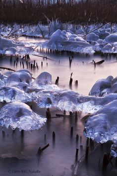 """Ice tree"" Lac de Neuchatel - Switzerland"