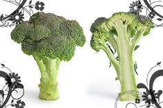 800px-Broccoli_and_cross_section_edit_Lillia