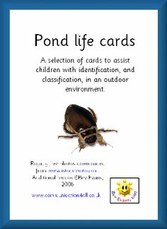 Pond Life cards to help children identify what they find in a pond dipping session - UK source.