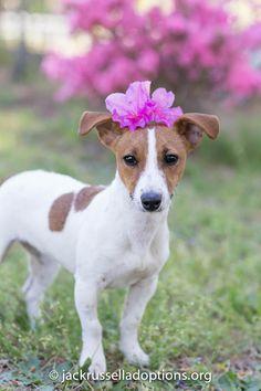 709 Best Cathy Ann Miller Gates Raymond images | Pets, Animal
