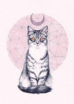 Mystic Kitten | Peter Carrington