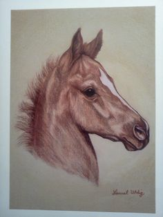 Foal portrait in colored pencil by Laurel Uhlig