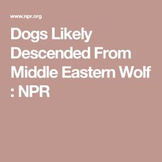 Dogs Likely Descended From Middle Eastern Wolf : NPR