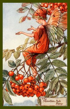 The Mountain Ash Fairy by Cicely Mary Barker from the 1920s. Quilt Block of vintage fairy image printed on cotton. Ready to sew.  Single 4x6 block $4.95. Set of 4 blocks with pattern $17.95.