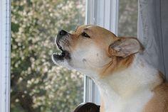 Dog Behaviourist Consultant - http://www.dog-ramblers.co.uk/dog-behaviourist-consultant/  #DogBehaviourist