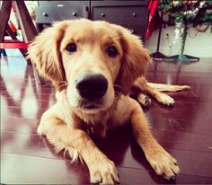 15 Ways Your Dog Is Better Behaved Than Your Holiday Guests