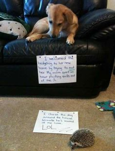 These animal pics will crack you up - Pet shaming
