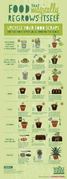 Plants and veggies that regrow when you plant scraps. A great way to reuse those veggie scraps.