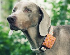Collar Pouches | 33 Totally Do-Able D.I.Y. Projects For Your Pets