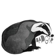 B is for Badger #animalart