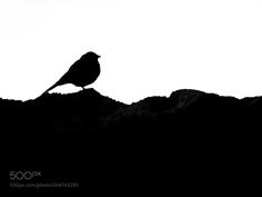 Bird in a cave - Morocco by nicklaborde from http://500px.com/photo/204743285 - . More on dokonow.com.