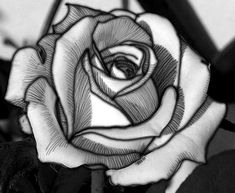 b/w Rose tattoo