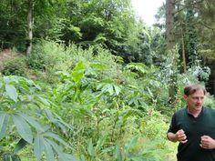 Le blog de Parcs et Jardins de L'Oise: Jardin Jungle Karlostachys, une jungle en Normandi...
