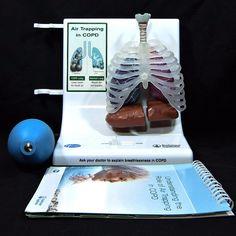 Pfizer COPD Lung Model & Booklet O5SP33E Boehringer Ingelheim N70012 Works #Pfizer
