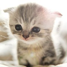 Kitten. Have you ever seen something so cute it makes you want to cry?