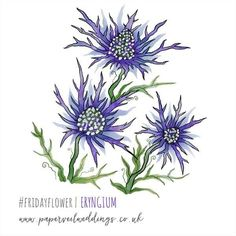 It's been a while but here is today's #fridayflower! As requested  enjoy!  #eryngium #bluehobbit #digital #drawing #illustration #botanical #purple #blue #handdrawn #flowers #nature #plants #ink #watercolour #sketchesapp #ipadpro #applepencil
