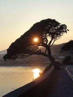 Blick nach Sainte Maxime par Betti Fust