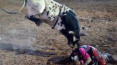 BESTPIX - Cunnamulla Festival.Nicht nur in Spanien haben Stierkämpfe eine große Tradition. Auch auf dem Cunnamulla Fella Festival in Australien testen sich jährlich Stierreiter mit den schweren Tieren. In diesem Fall hat der Reiter die Kontrolle über den Stier aber wohl verloren.