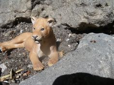 realistic schleich pictures - Google Search