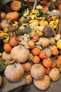 Vive les #légumes anciens http://www.aujardindewillemse.fr/vive-les-legumes-anciens