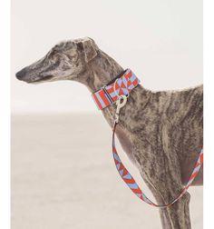 Collar para perro Brott textura Gurb