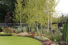 Pojedyncze pytania na temat projektowania rabat - strona 541 - Forum ogrodnicze - Ogrodowisko
