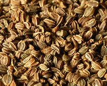 selderey-semena