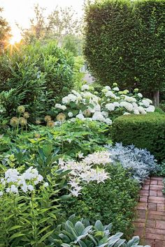 """Tone on Tone: Our Garden in Southern Living - """"In summer, this white border is at its peak with a showstopping display of white daisies, hydrangeas, irises, lilies and phlox. Moon Garden, Dream Garden, Laurel Hedge, Garden Cottage, Garden Bed, Lush Garden, Backyard Cottage, Big Garden, Balcony Garden"""