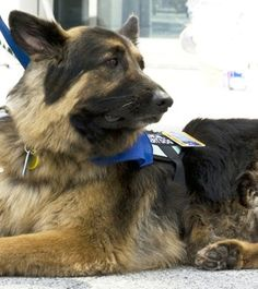 Former Texas shelter dog honored for getting help for owner when fall left her unconscious.