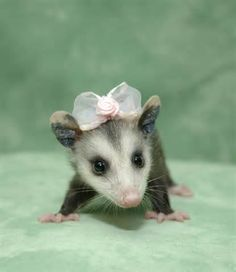 Animals in clothes - Yahoo! Canada Image Search Results