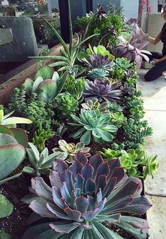 Amazing 39 Enjoying Succulents Garden Design Ideas To Try Asap Succulent Landscaping, Succulent Gardening, Landscaping With Rocks, Cacti And Succulents, Planting Succulents, Backyard Landscaping, Succulent Wall, Succulent Rock Garden, Succulents Wallpaper