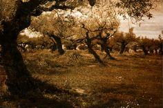 Olive Spring - Signert og nummerert foto