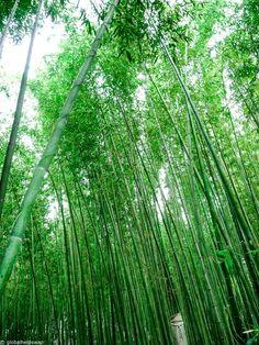 Things Do Kyoto Japan Globalhelpswap – Images Gallery Go To Japan, Visit Japan, Japan Trip, Japan Guide, Japan Travel Guide, Garden Inspiration, Travel Inspiration, Kyoto Garden, China Travel