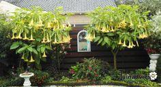 Een foto uit de tuin van Jan kik