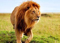 Our collection of affordable Kenya safaris packages are popular. We offer variety of Kenya only customized safari or Kenya and Tanzania combined safaris. National Park Camping, National Parks, Camping San Sebastian, Beaches Near Me, Tanzania Safari, California Camping, African Safari, East Africa, Bird Watching