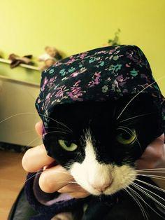 I am not a cat