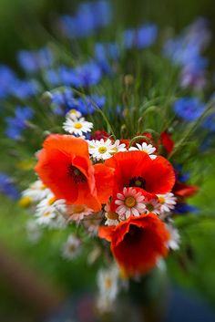 Bouquet of fresh poppies camomiles and cornflowers Art Print by Jaroslaw Blaminsky. All prints are professionally printed, packaged, and shipped within 3 - 4 business days. Wedding 2015, Dream Wedding, Summer Plants, Good Morning Greetings, Flower Photos, All Print, Peonies, Prints, Amazing Nature