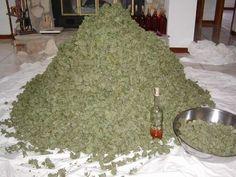 Smoking Pot Is American as Heck Ak 47, Growing Marijuana Indoor, Marijuana Plants, Cannabis Growing, Cbd Oil For Sale, Puff And Pass, Edibles Online, Buy Weed Online, Online Buying