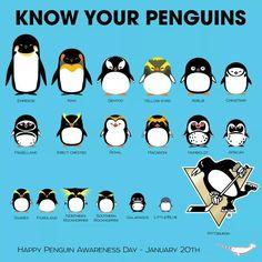 Types of penguins Pens Hockey, Hockey Puck, Ice Hockey, Hockey Stuff, Hockey Players, Hockey Party, Hockey Sticks, Blackhawks Hockey, Chicago Blackhawks