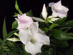 Klepněte pro větší obrázek Plants, Garden, Garten, Planters, Gardening, Outdoor, Home Landscaping, Plant, Tuin