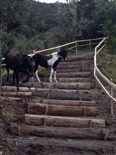 Using logs to make steps to avoid erosion on a slope. Paddock Trail, Horse Paddock, Horse Stables, Dream Stables, Dream Barn, Horse Exercises, Horse Property, Barn Plans, Horse Care