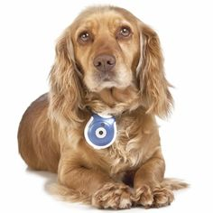 Pet's Eye View Camera - See the world from a dog's or cat's view with this digital camera that attaches to your pet's collar and takes pics at regular intervals.