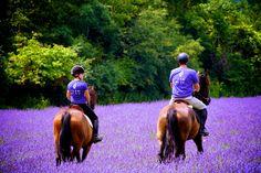 Terre Bleu tour guides on horseback