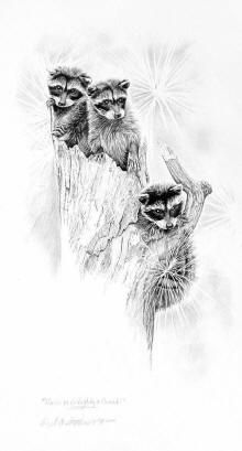 raccoon pencil drawings of raccoons on an outhouse and raccoons in a tree, by Virrgil C. Stephens western artist