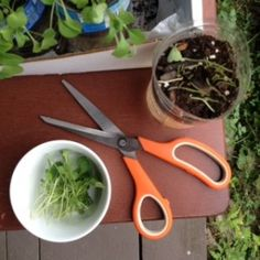 harvested-micro-greens   Repurposed plastic water bottle method to grow greens and herbs on your porch or window sill. About once per week, plant a pinch of seeds in the soil. Use one or two containers per person, per day. Or use more, depending on the amount you expect to consume. When the sprouts are ready, harvest them with clean scissors as needed.